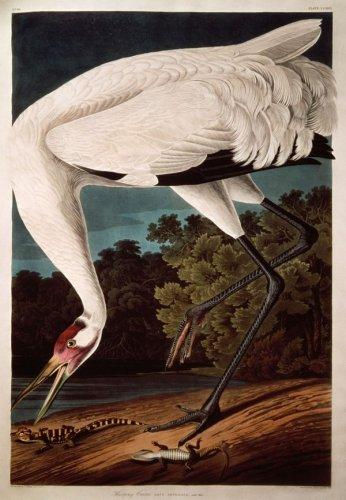 Найдорожчі книги світу («Птахи Америки» , Джон Джеймс Одюбон (The Birds of America, John James Audubon)) (3)