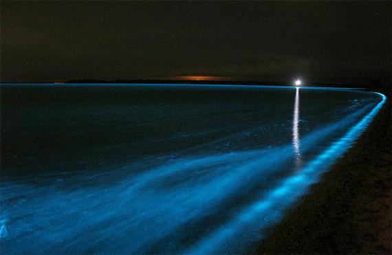Дивовижне біолюмінісцентне озеро в Австралії (4)