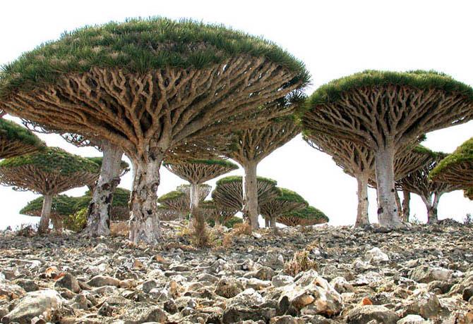 Острів Сокотра - дивовижне місце як з іншої планети (12)