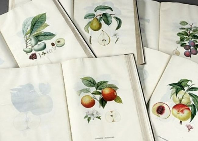 Найдорожчі книги світу («Про плодові дерева», Анрі Луї Дюамель дю Монсо (Traitе des Arbres Fruitiers, Henri Louis Duhamel du Monceau)) (8)