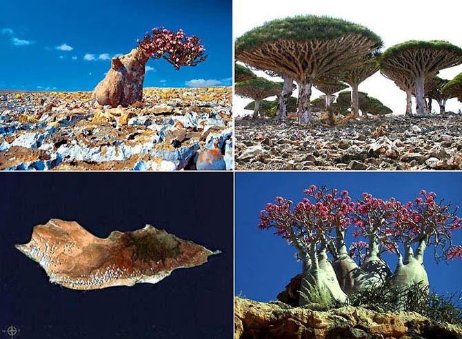 Острів Сокотра - дивовижне місце як з іншої планети (10)