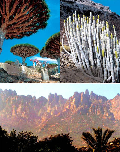 Острів Сокотра - дивовижне місце як з іншої планети (9)