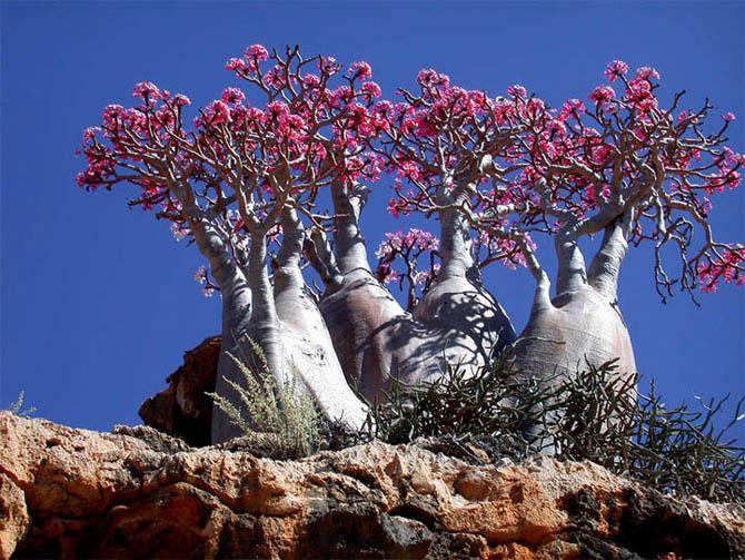 Острів Сокотра - дивовижне місце як з іншої планети (8)