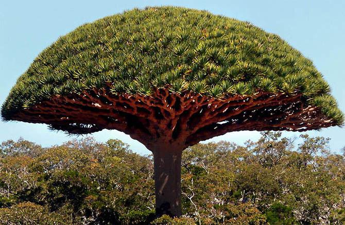 Острів Сокотра - дивовижне місце як з іншої планети (3)