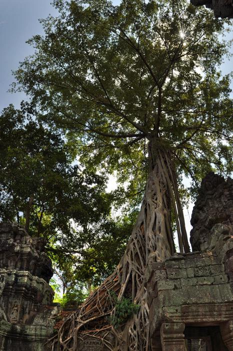 Ангкор Ват у Камбоджі - містичне та дивовижне по своїй атмосфері і масштабності місце (5)