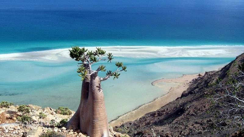 Природа-острова-Сокотра.-Ємен