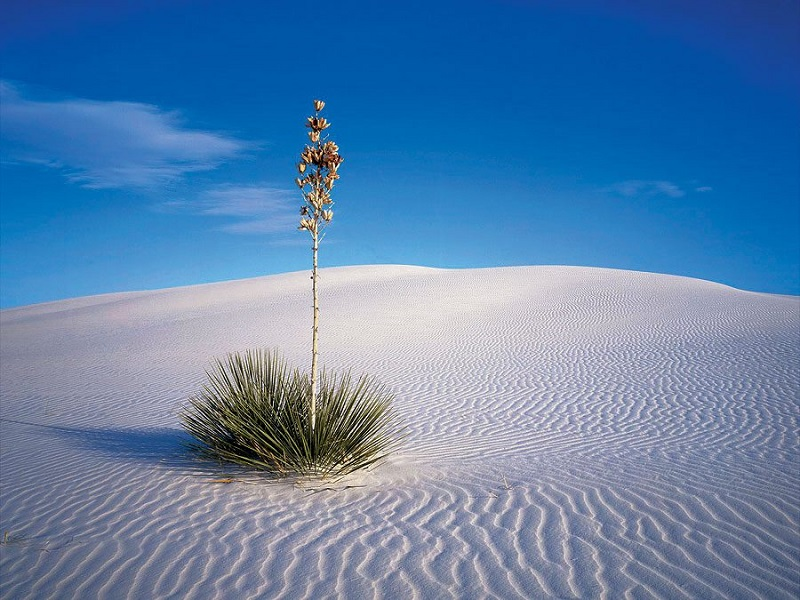 19-Білі піски острова Сокотра. Ємен