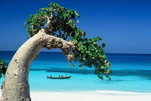 2-огіркове дерево острова Сокотра