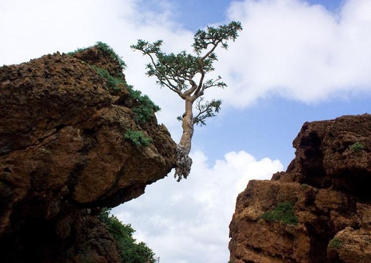 23-Природа острова Сокотра. Ємен