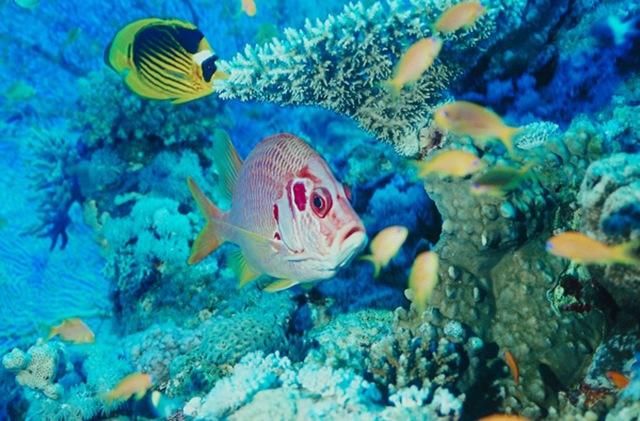 Велика блакитна дірка в океані: Підводна печера неподалік Белізу (4)