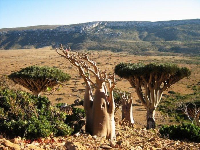 4-Природа острова Сокотра