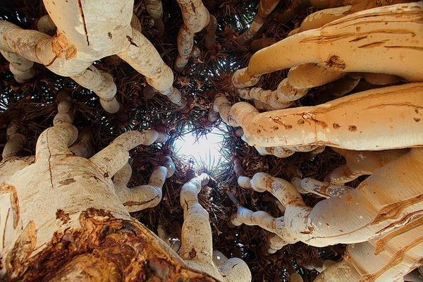8-Природа острова Сокотра. Ємен