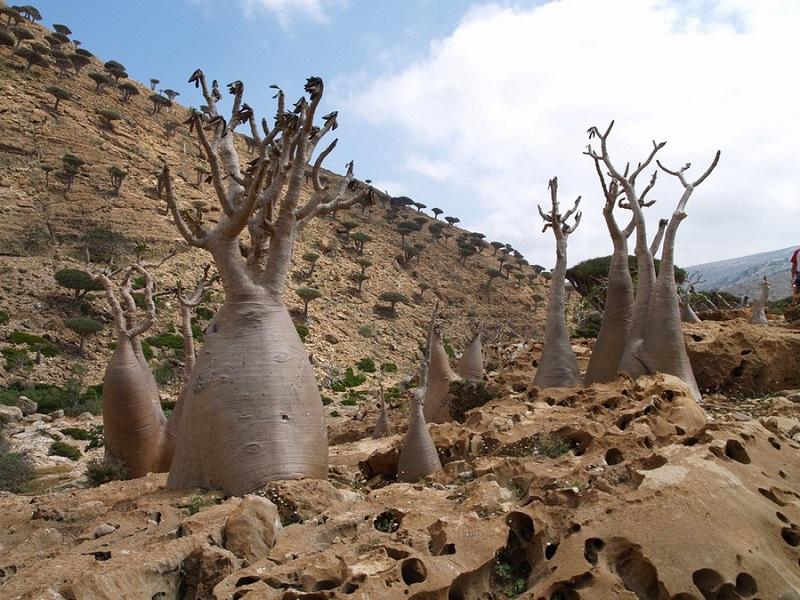 9-Природа острова Сокотра