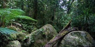 Дивовижна природа вологих тропіків Квінсленда (4)