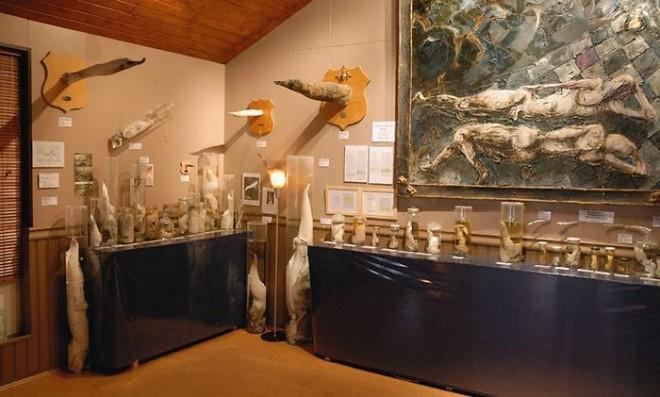 Члени тварин, людей, ельфів і тролів. Ісландська фаллологіческій музей (6)