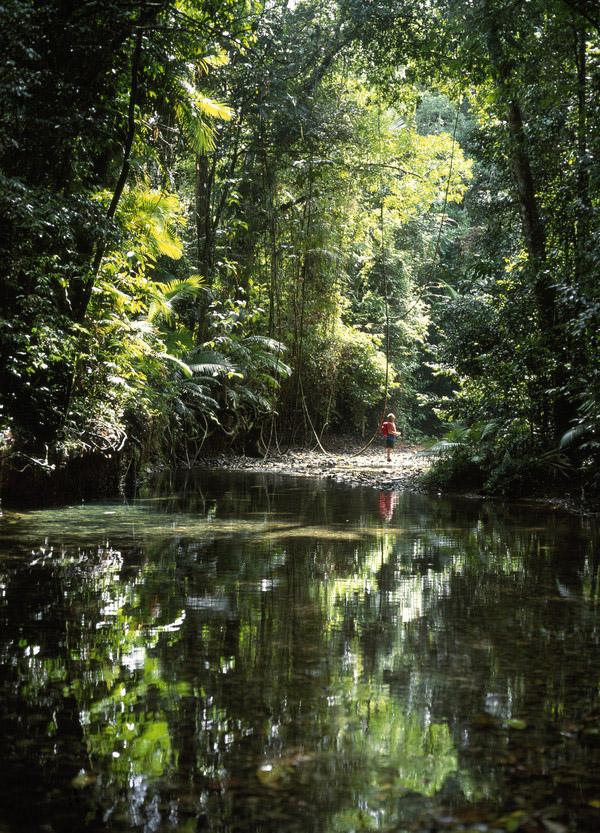 Дивовижна природа вологих тропіків Квінсленда (5)