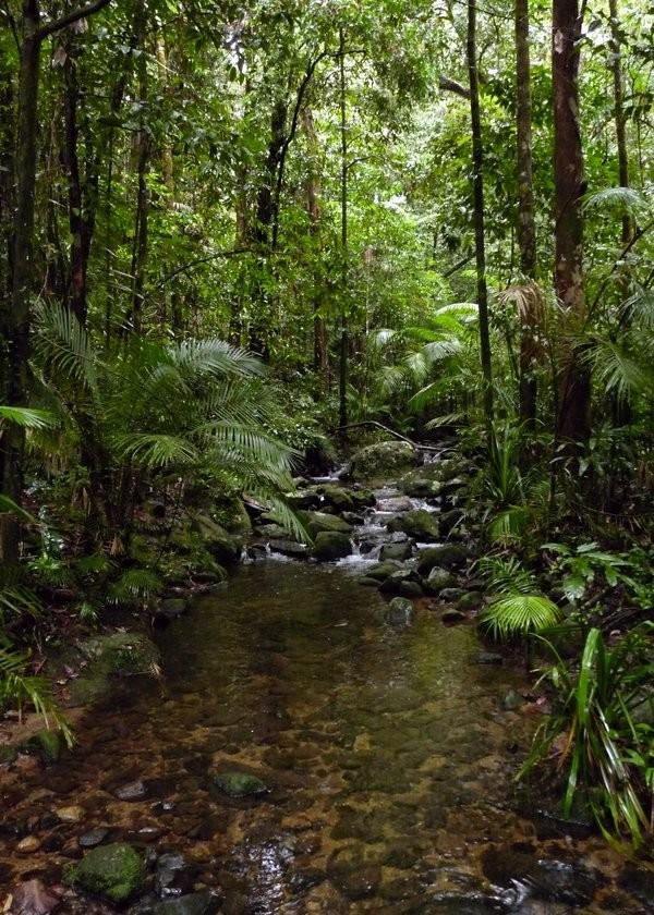Дивовижна природа вологих тропіків Квінсленда (3)