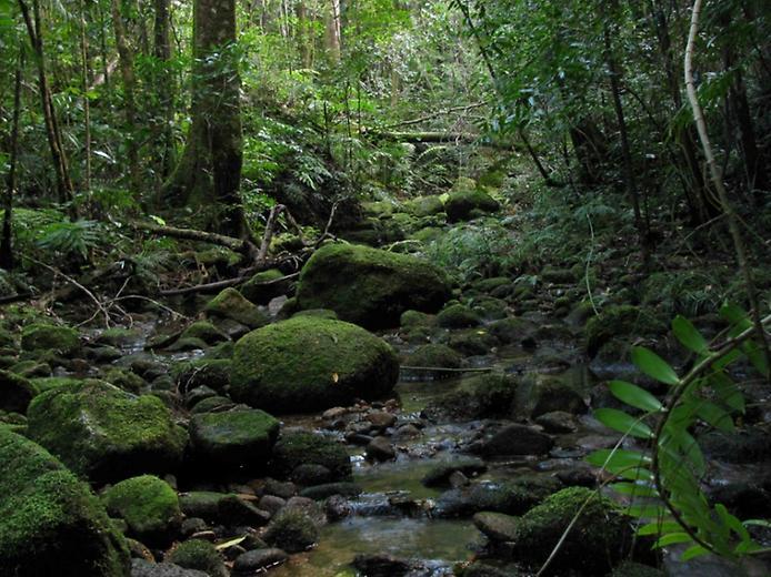 Дивовижна природа вологих тропіків Квінсленда (1)