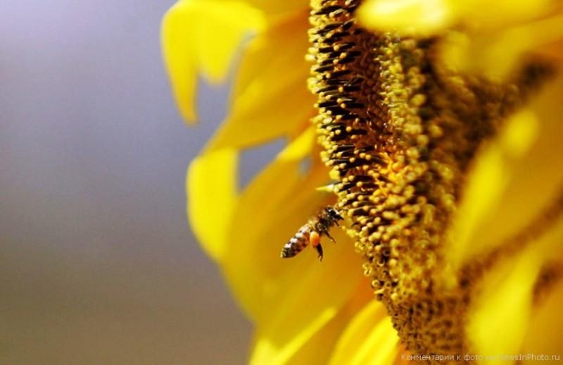 З цих квітів бджоли збирають дуже багато меду
