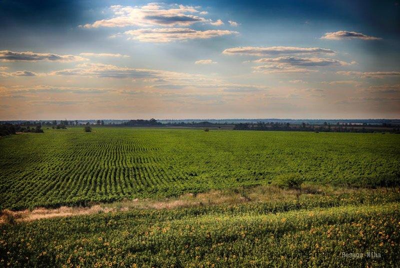 Соняшникові поля фото: Міха Bes