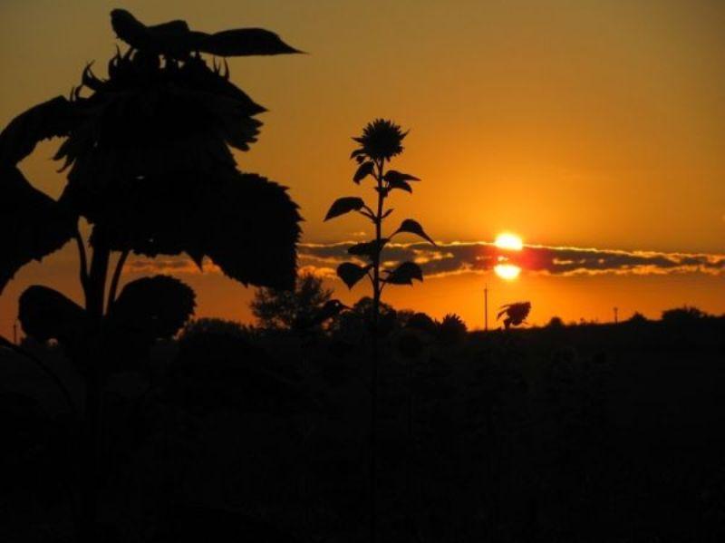Село Бужани фото: Олена