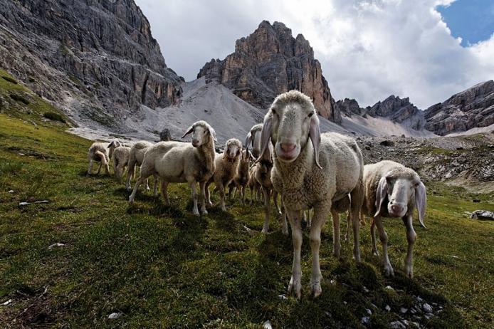 Доломітові Альпи - дивовижної краси 150-кілометровий гірський масив в Східних Альпах. Скарб Італії (17)