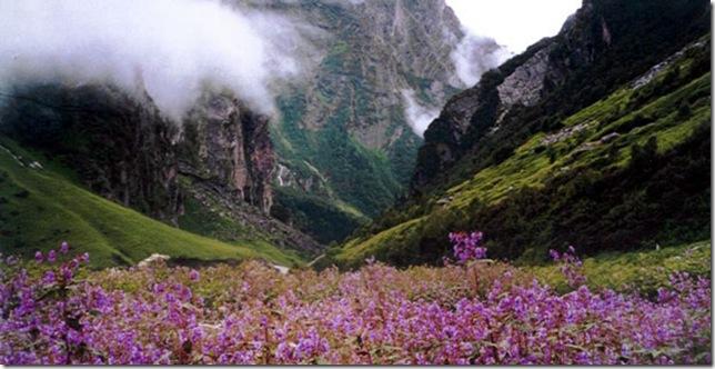 Парк Долина Квітів в Індії - дивовижний сплеск кольору або квітковий рай (7)