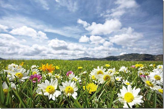 Парк Долина Квітів в Індії - дивовижний сплеск кольору або квітковий рай (6)