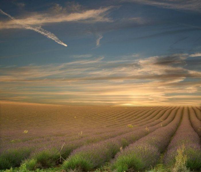 Дивовижна краса неосяжних лавандових полів на півдні Франції (3)