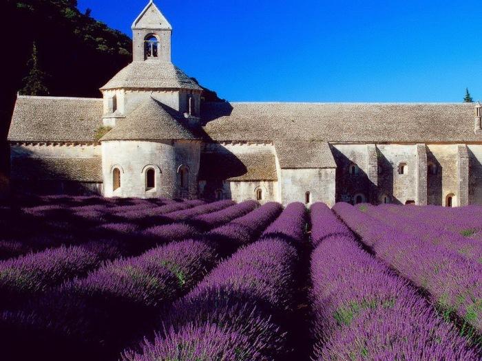 Дивовижна краса неосяжних лавандових полів на півдні Франції (2)