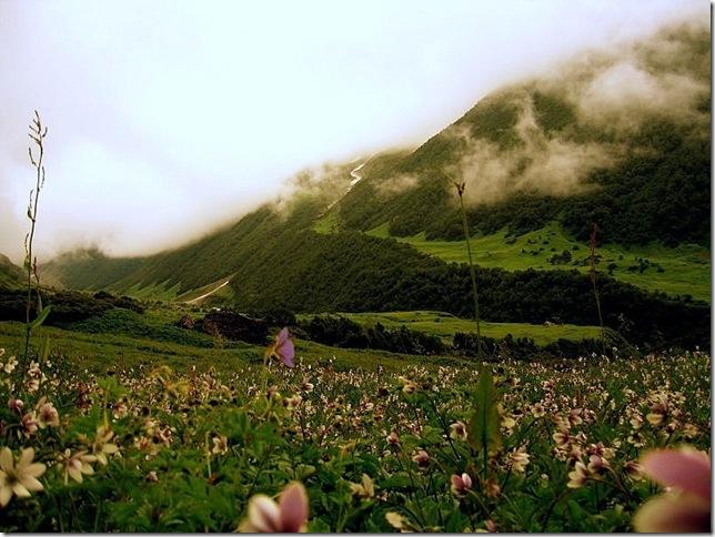 Парк Долина Квітів в Індії - дивовижний сплеск кольору або квітковий рай (9)