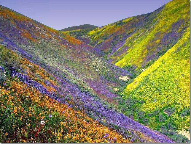 Парк Долина Квітів в Індії - дивовижний сплеск кольору або квітковий рай (1)