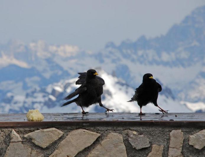 Доломітові Альпи - дивовижної краси 150-кілометровий гірський масив в Східних Альпах. Скарб Італії (5)