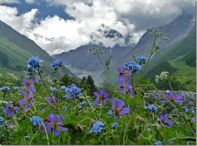 Парк Долина Квітів в Індії - дивовижний сплеск кольору або квітковий рай (5)