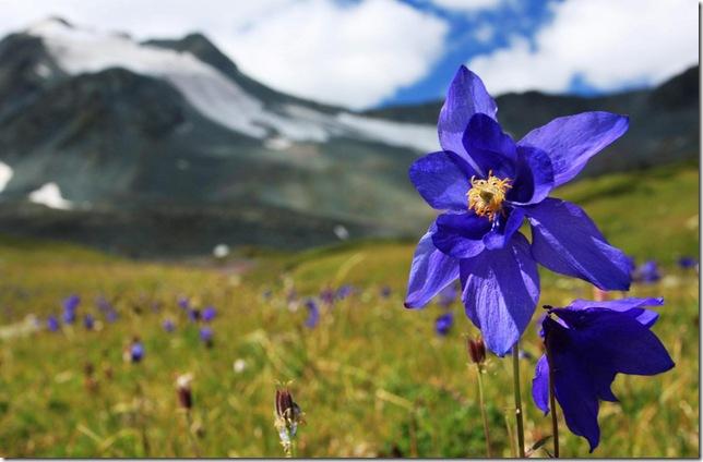 Парк Долина Квітів в Індії - дивовижний сплеск кольору або квітковий рай (4)