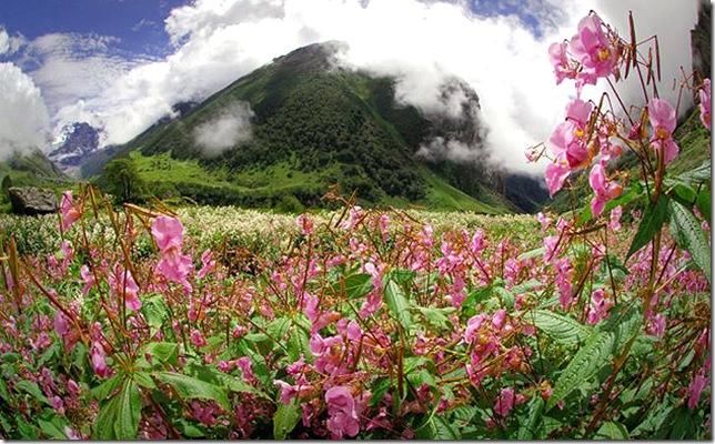 Парк Долина Квітів в Індії - дивовижний сплеск кольору або квітковий рай (3)
