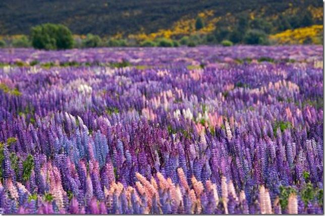 Парк Долина Квітів в Індії - дивовижний сплеск кольору або квітковий рай (2)