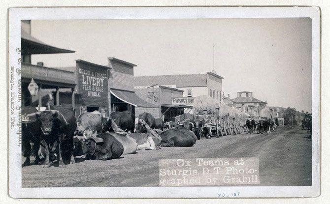 Бики і фургони на головній вулиці міста Стерджіс в Південній Дакоті. Знімок зроблений між 1887 і 1892 роками.