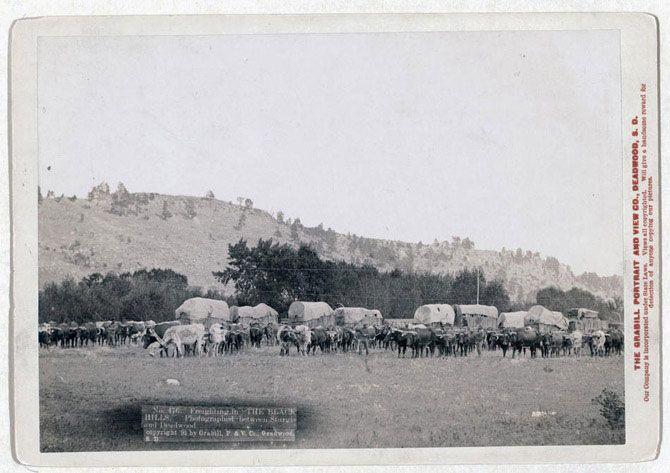 Вантажні перевезення в Блек-Хіллс. Знімок зроблений в 1891 році.