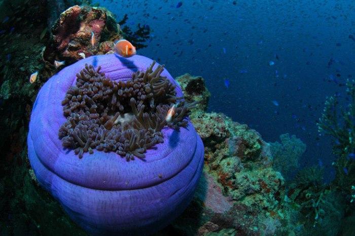Острови Чуук (Трук) — Лагуна загиблих кораблів (21)