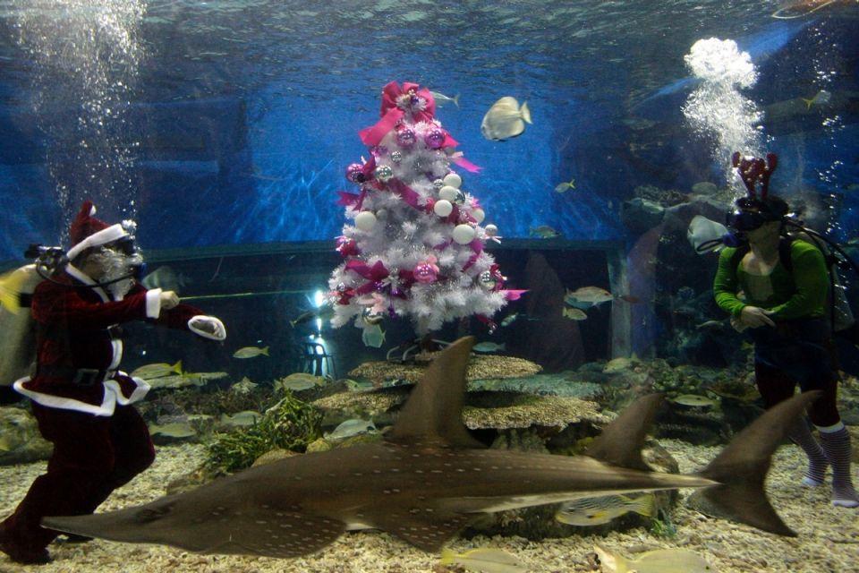 У манільскому акваріумі встановили підводну ялинку, Філіппіни.
