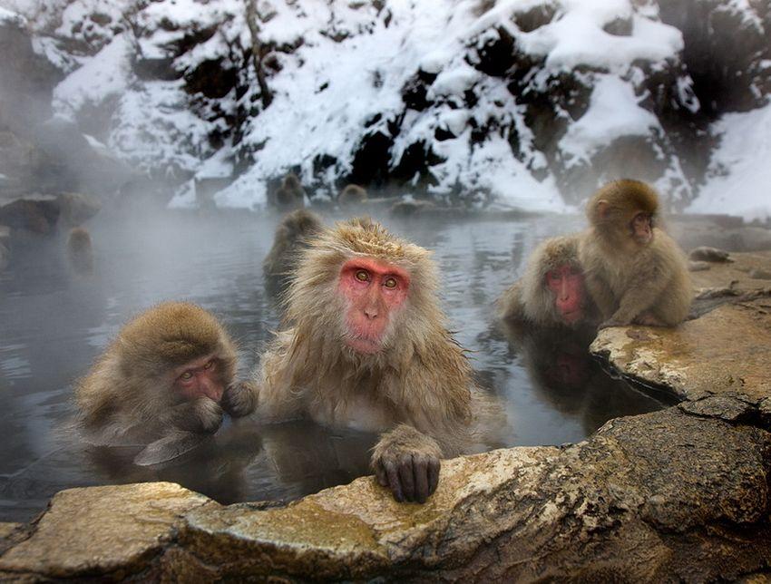 Мавп'ячий курорт Долина Дзігокудані («Пекельна долина») (13)