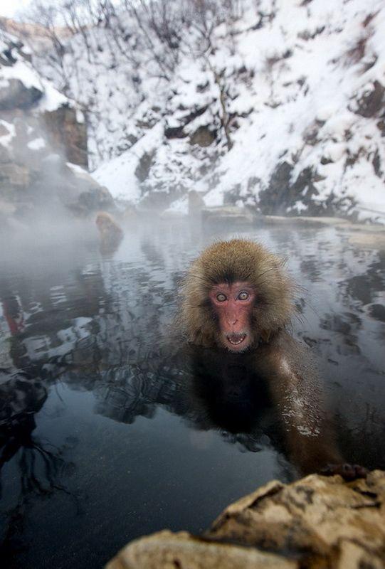 Мавп'ячий курорт Долина Дзігокудані («Пекельна долина») (9)