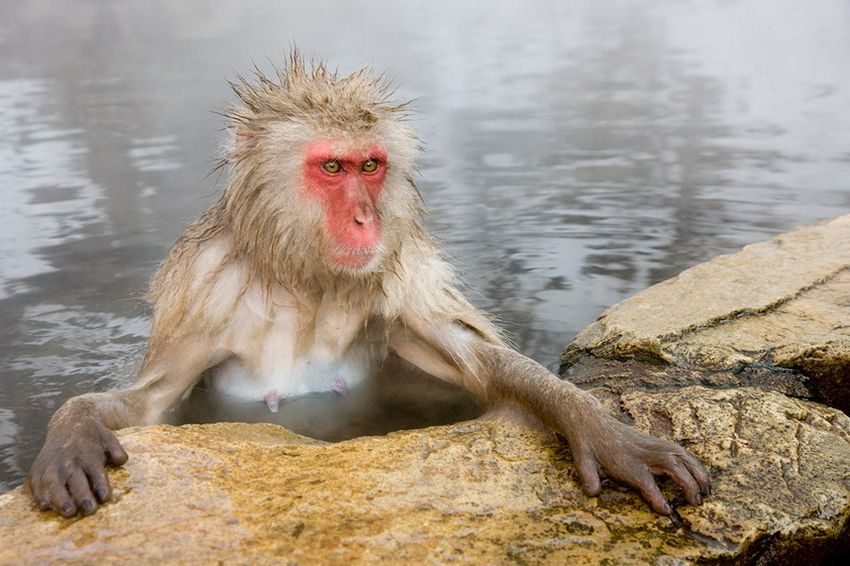 Мавп'ячий курорт Долина Дзігокудані («Пекельна долина») (5)
