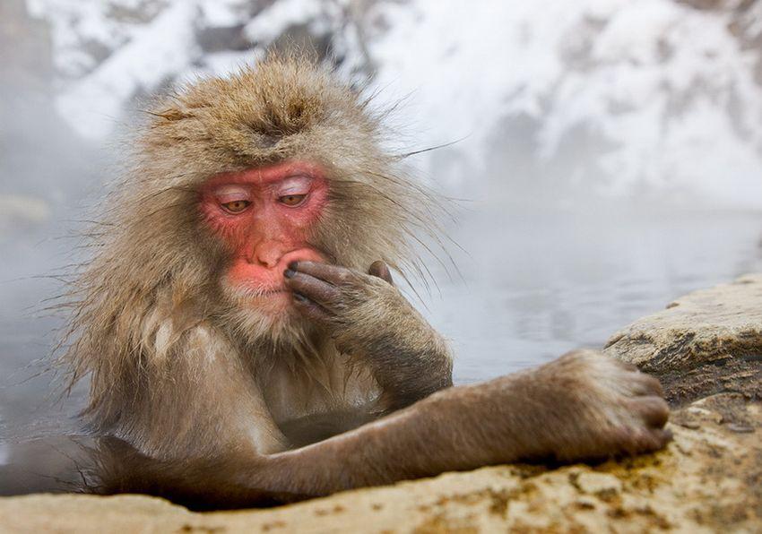 Мавп'ячий курорт Долина Дзігокудані («Пекельна долина») (3)