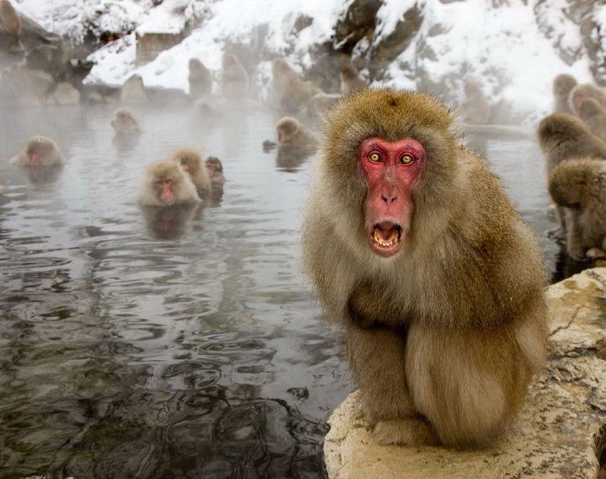 Мавп'ячий курорт Долина Дзігокудані («Пекельна долина») (2)