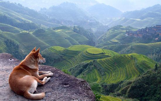 «Сховище» пейзажів, Китай.