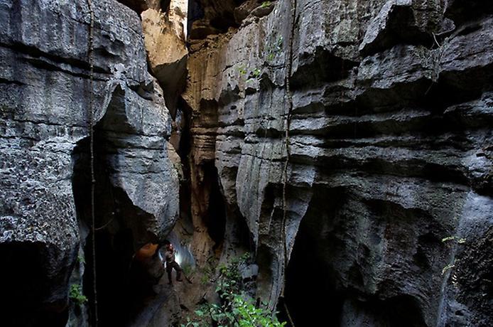 Кам'яний ліс Мадагаскару (7)