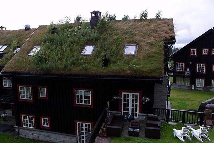 Унікальні зелені дахи в Норвегії (2)