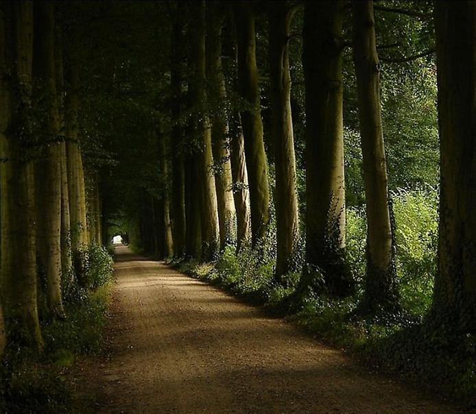 Фотографії найкрасивіших доріг (9)